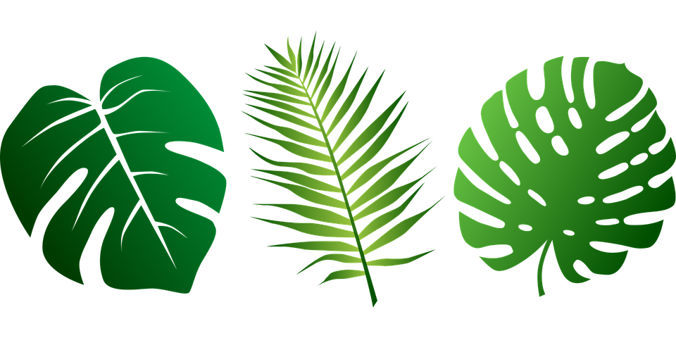 Free Download Of Tropical Leaves Assortment Transparent Background Leaf Images Leaves Tropical Leaves Dracaena recina, succulent tropical leaf vintage illustration transparent png, remix from original artwork of benjamin… leaves design resources · high quality aesthetic backgrounds and wallpapers, vector illustrations, photos, pngs, mockups, templates and art. leaf images leaves tropical leaves
