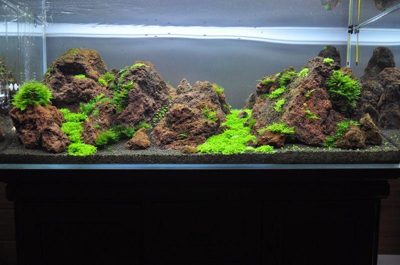 Lava Rock Aquarium Aquascape Aquarium Landscape Planted Aquarium