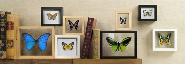 17 best images about insects in your interior on pinterest butterfly print fish print and butterfly art