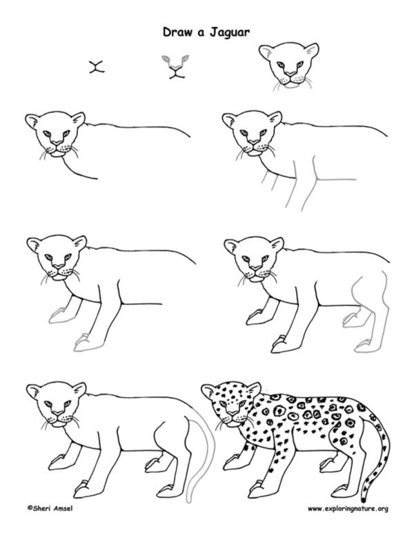 How To Draw Easy Animals Step By Step Image Guide Easy Drawings Rainforest Animals Animal Drawings