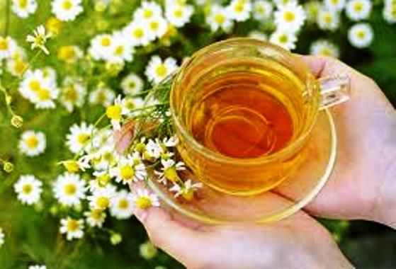 Chá de camomila, um calmante clássico | Chamomile tea benefits ...