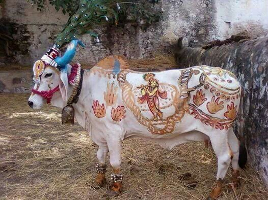 37+ Why is the cow sacred in indian culture trends
