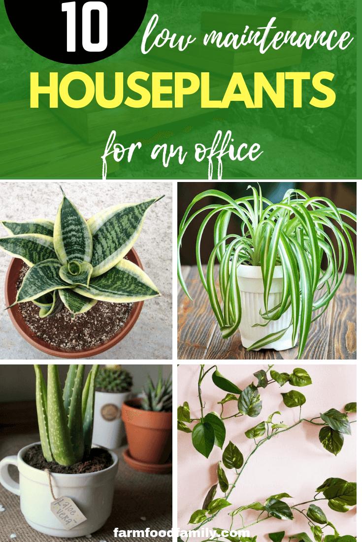 Top 10 Low Maintenance Low Light Houseplants For An Office Low Maintenance Indoor Plants Plants Indoor Plants Low Light