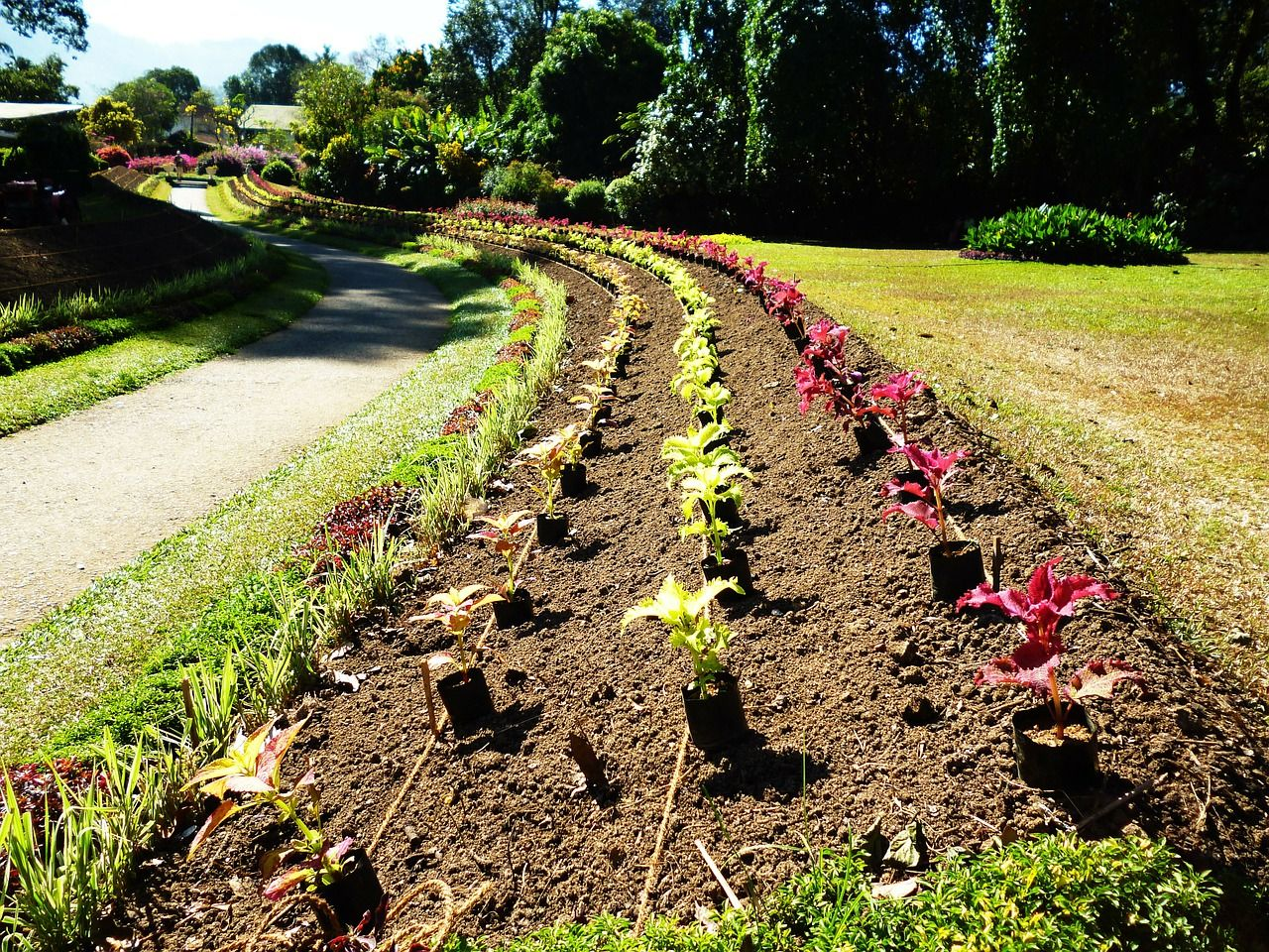 How to effortlessly start a flower bed from scratch – NaturalNews ...
