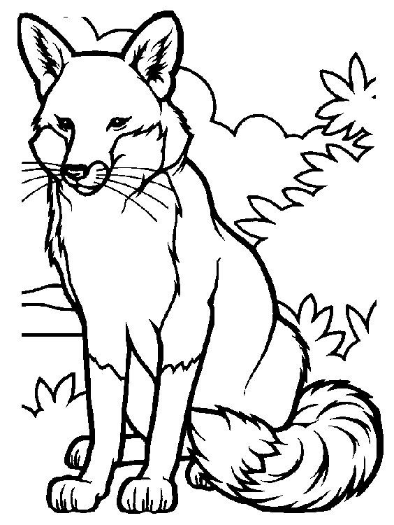 Colloring Animals Pictures Coloring Page Fox Animals Coloring