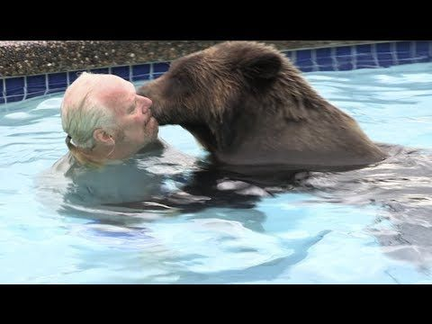 The Only Man In The World Who Can Swim With A Polar Bear Grizzly Man Youtube Unlikely Animal Friends Cool Pets Pet Tiger