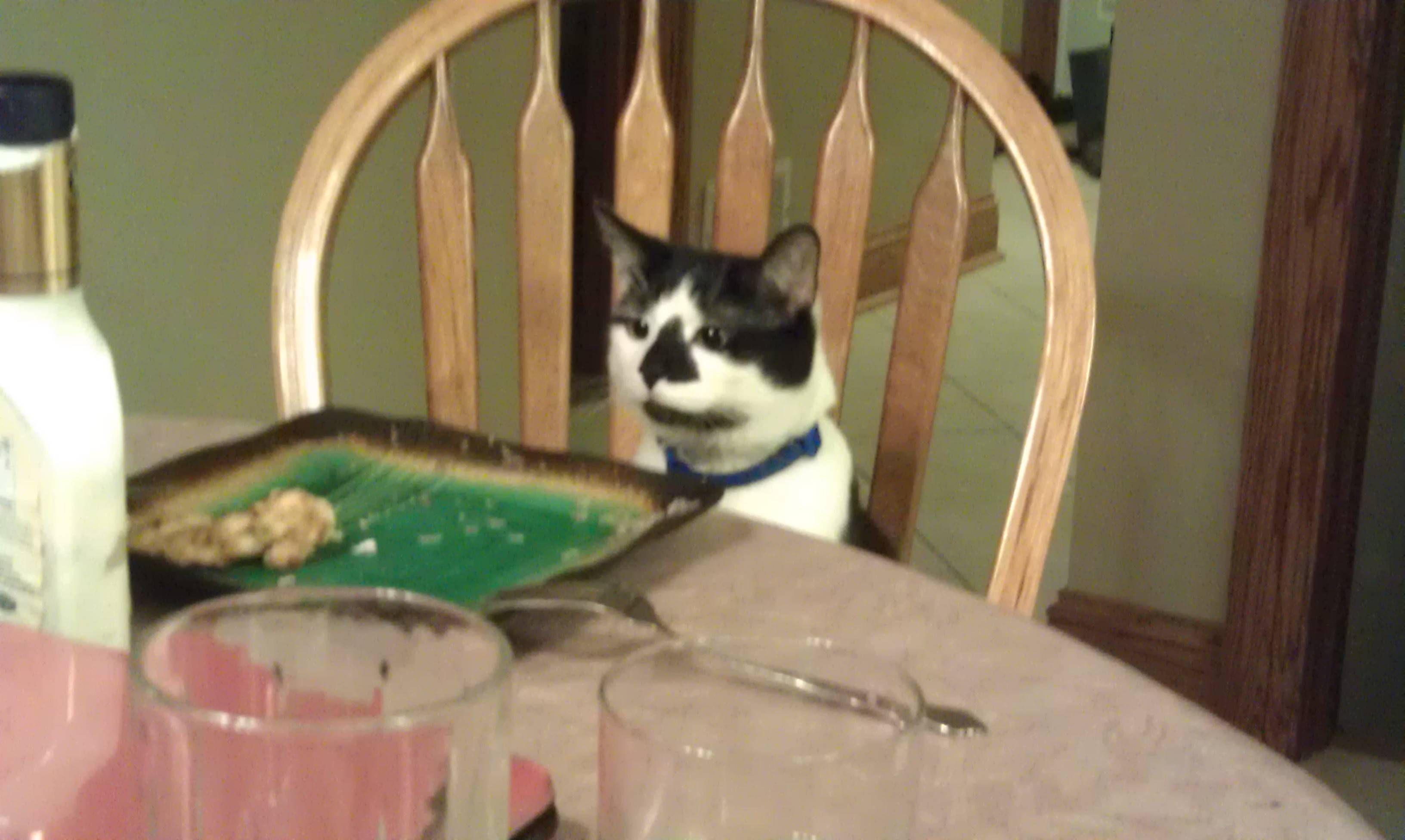 Sammy is ready for dinner!
