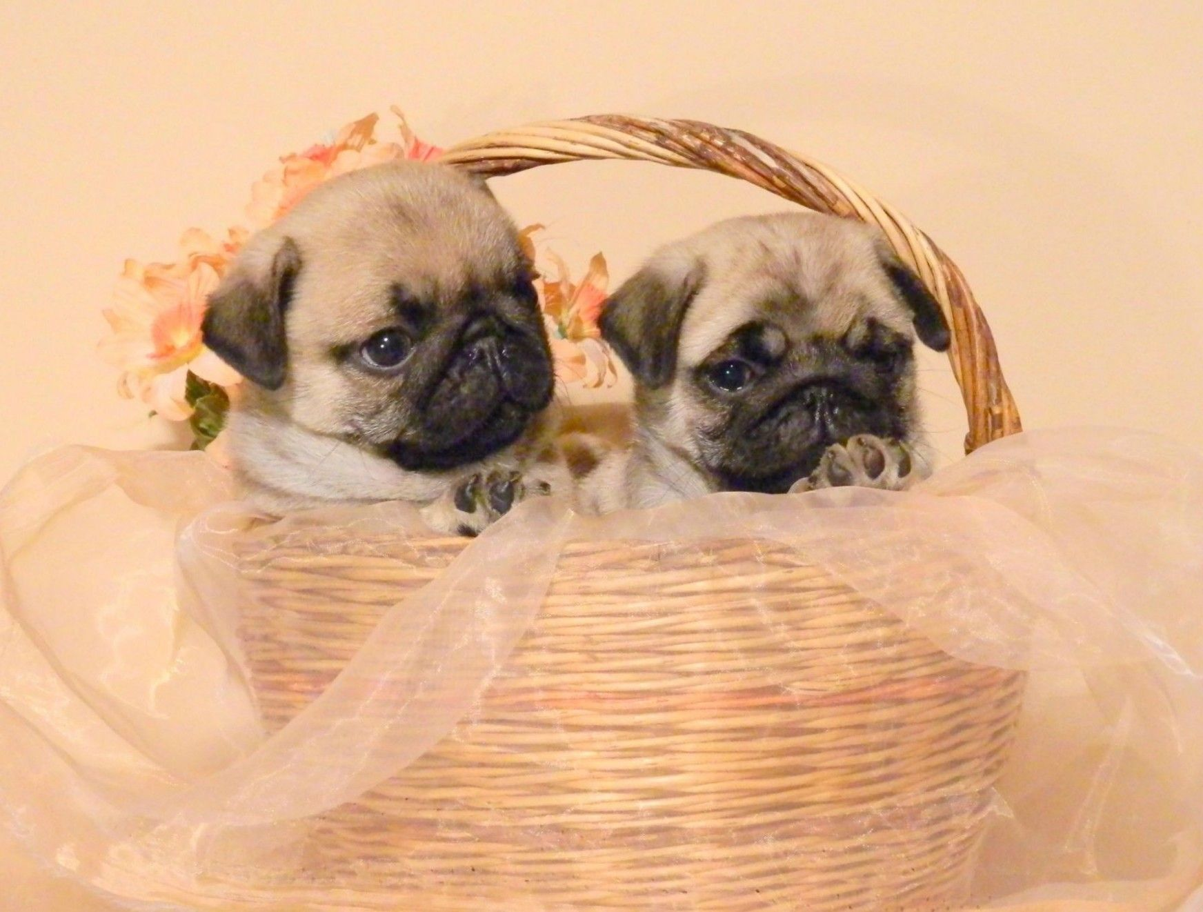 I Ordered This Gift Basket However I Asked For One Fawn And One