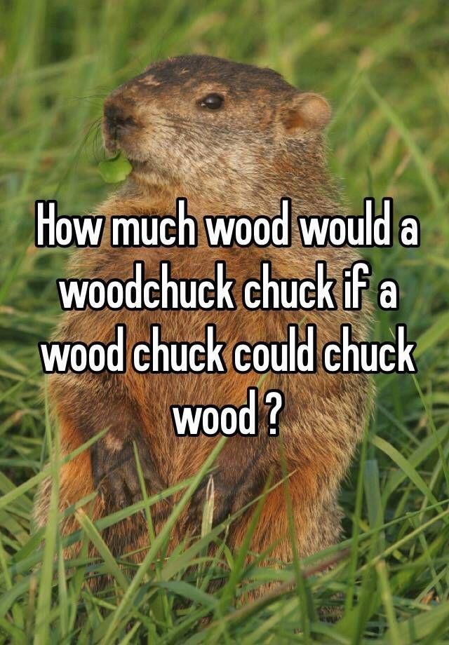 Does a woodchuck chuck wood. Does a woodchuck chuck wood.