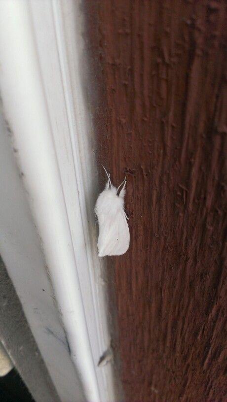 White moth outside my door