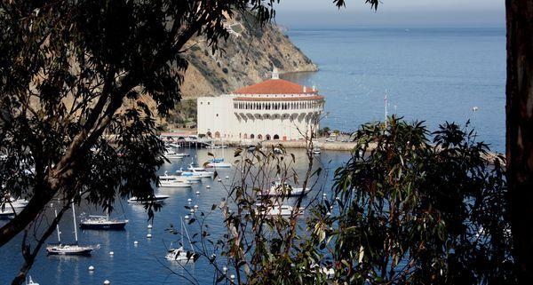 Catalina Island Hollywood History Grazing Buffalo And A New Museum Catalina Island New Museum La Trip