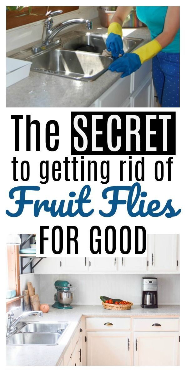 How To Get Rid Of Fruit Flies And Gnats Fast Top 10 Home Remedies Fruit Flies Fruit Fly Trap Diy Fruit Flies In House