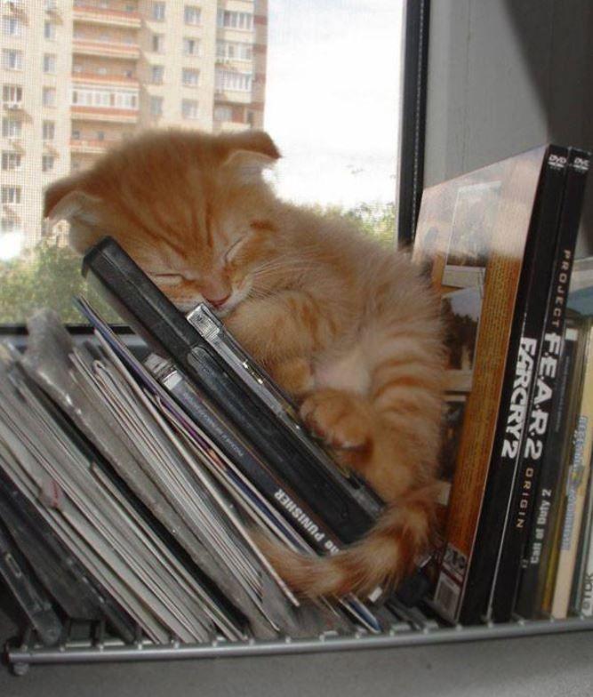 24 Katzen schlafen an den unmöglichsten Orten: pass' ich rein, da schlaf' ich auch! - Seite 3 von 3