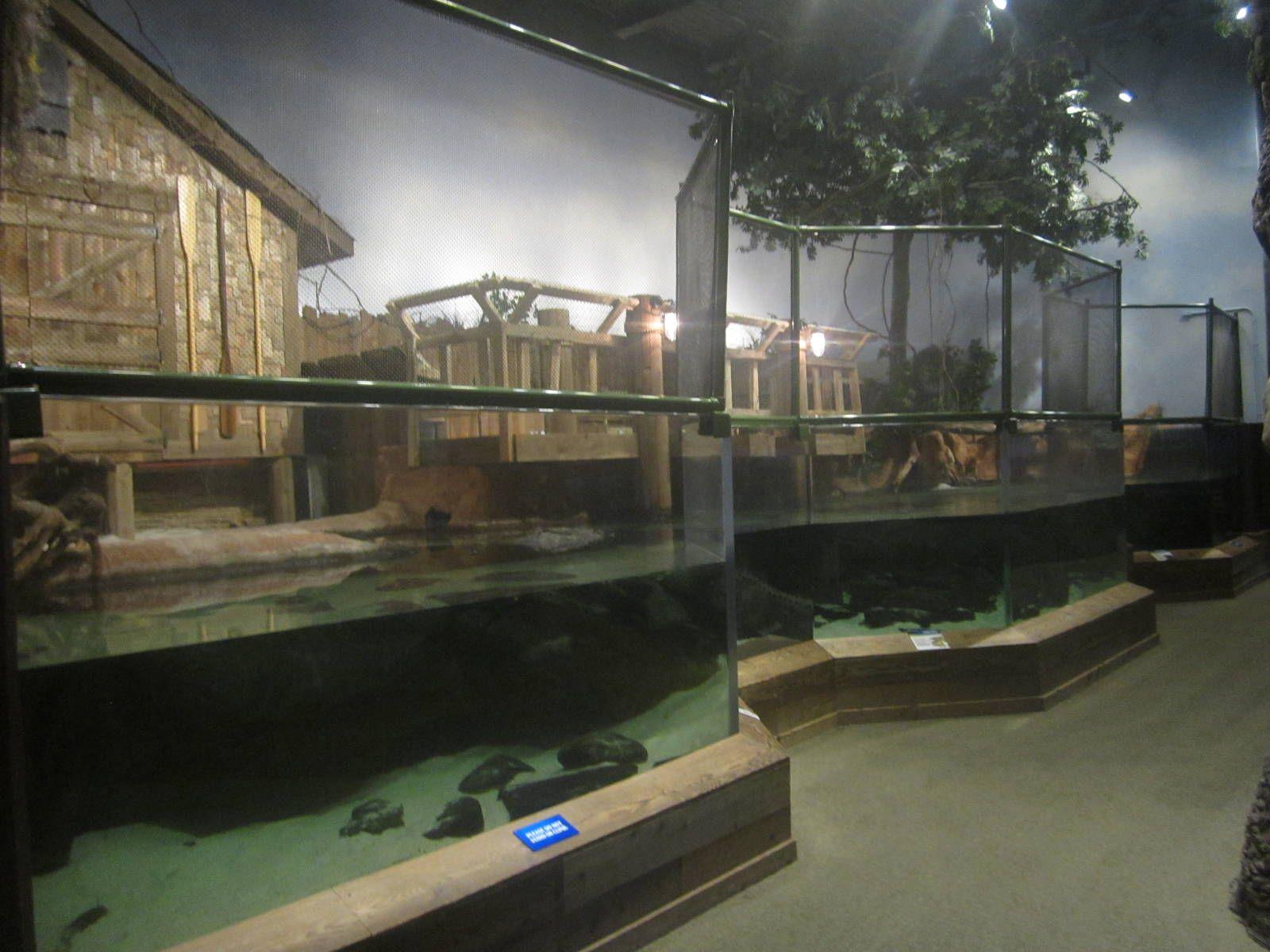 Indoor American Alligator Tank Vivarium Aquarium