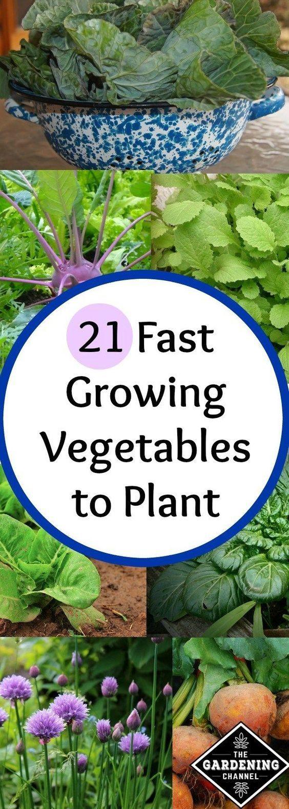 Pin On Vegetable Garden 400 x 300