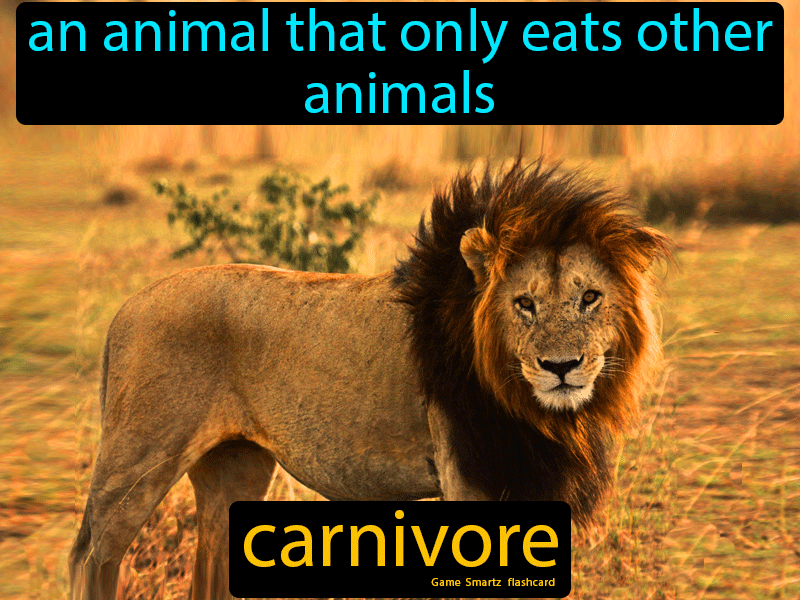 Carnivore An animal that only eats other animals. in 2020