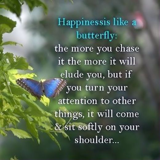 Happiness Is Like A Butterfly Life Quotes Quotes Spring Quote