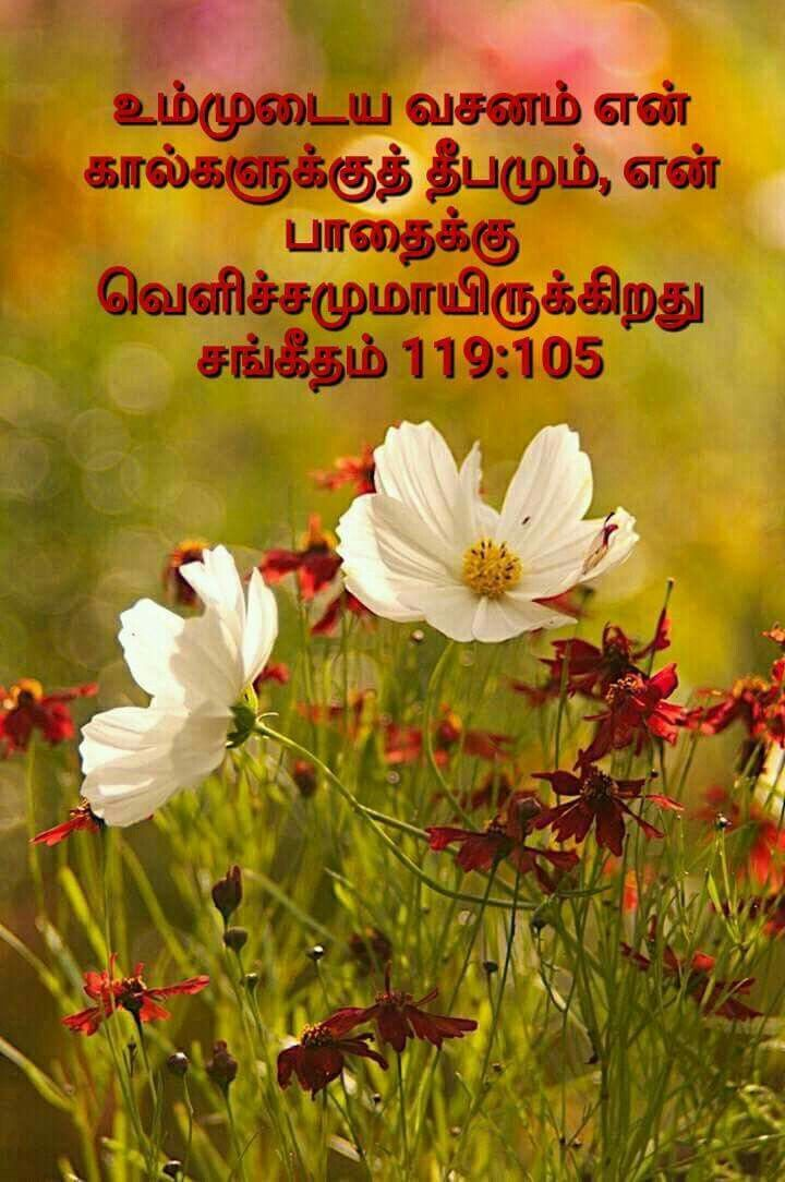 Pin By Tamil Mani On Bible Tamil Wallpapers Bible Vasanam In Tamil
