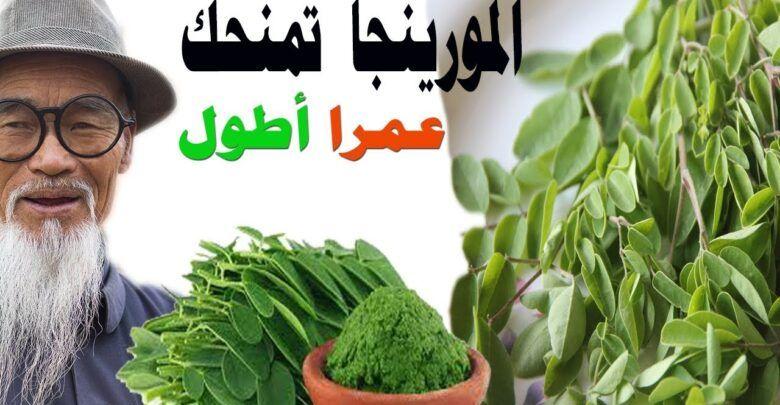 فوائد واضرار شجرة المورينجا Noeelme 14