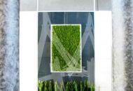 Zielony-obraz-z-mchu