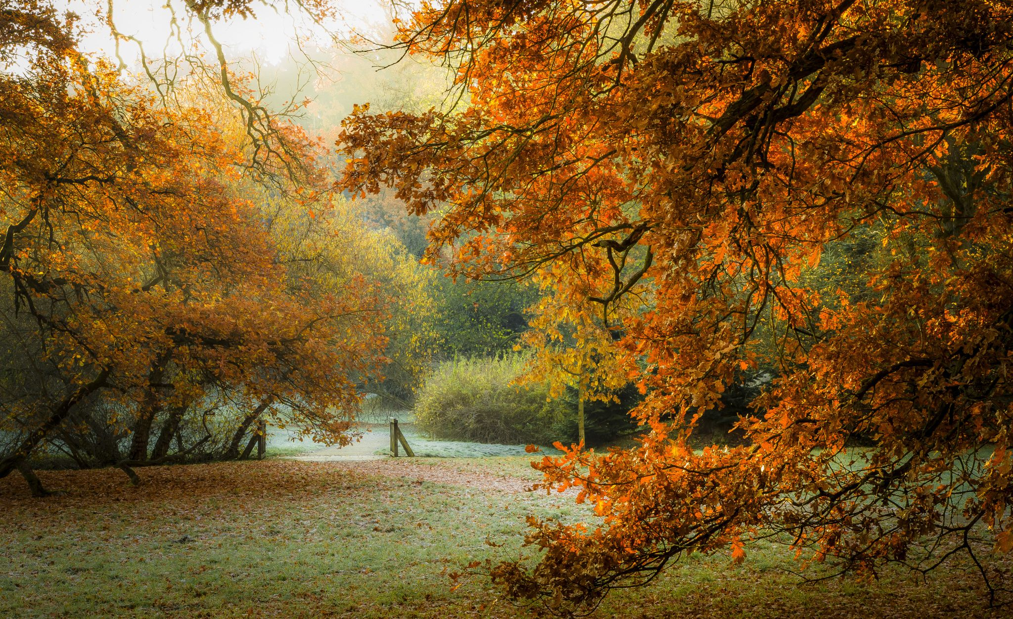 Charging Soul - Morning sun is refreshing and recharging; autumn in Pruhonice Park near Prague