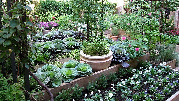 diy projects and ideas outdoor gardens organic gardening tips herb garden in kitchen on kitchen garden id=63837