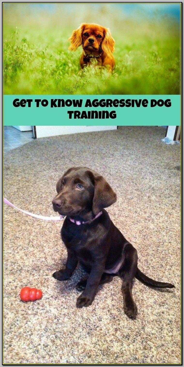 What To Do If You Need Aggressive Dog Training Dog Training