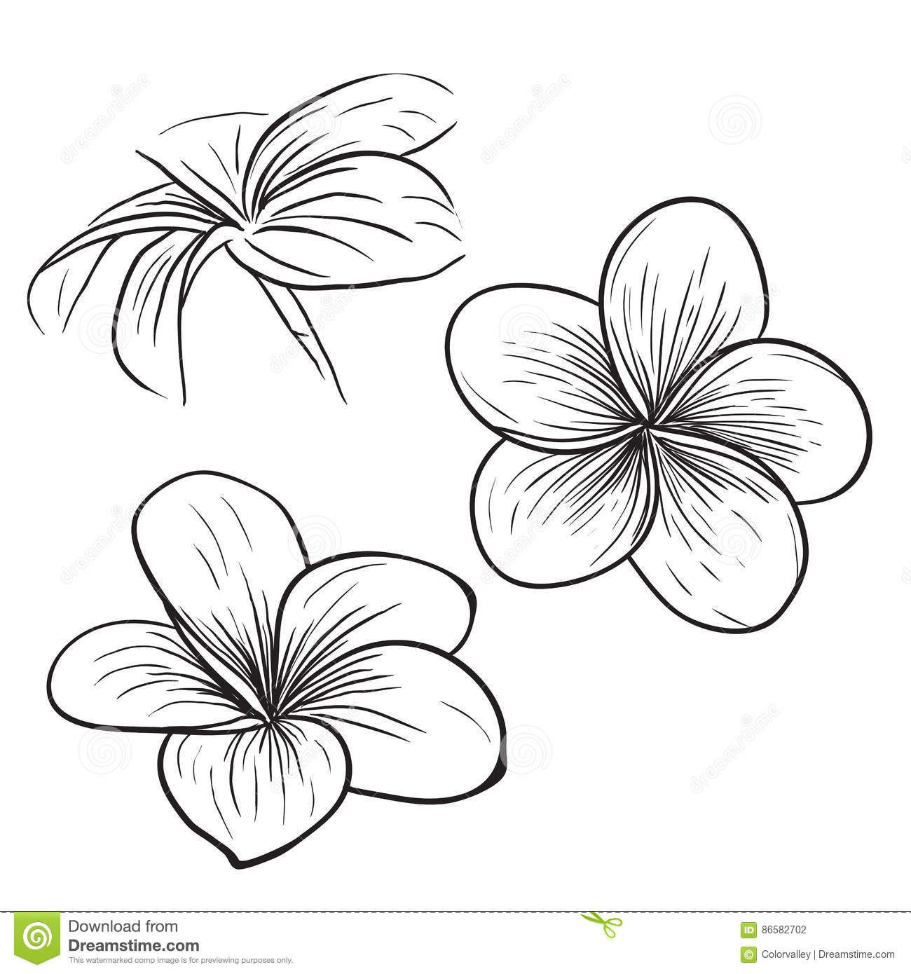 Plumeria Frangipani Tropical Flower Icon Stock Vector Image 86582702 Flower Sketches Tropical Flower Tattoos Flower Drawing