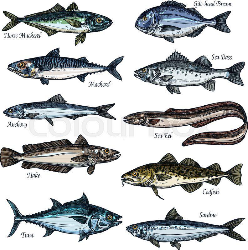 Stock Vector Of Fish Seafood Isolated Sketch Set Sea And Ocean Fish Vector Icon Of Tuna Cod Bass Bream Mackerel Eel An Fish Vector Fish Marine Animals