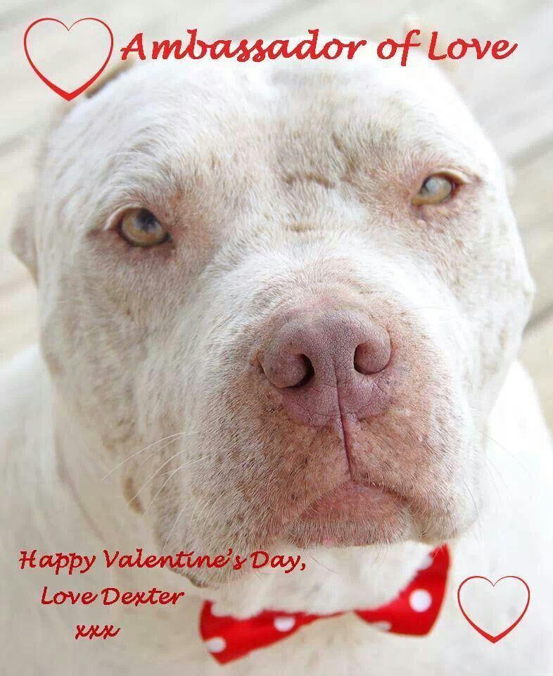Happy Valentines Day Funny Dog Memes Dog Shaming Nanny Dog