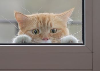 7 Tips To Keep Cats From Dashing Out The Door | Cat, Cat Behaviour And Cat  Insurance
