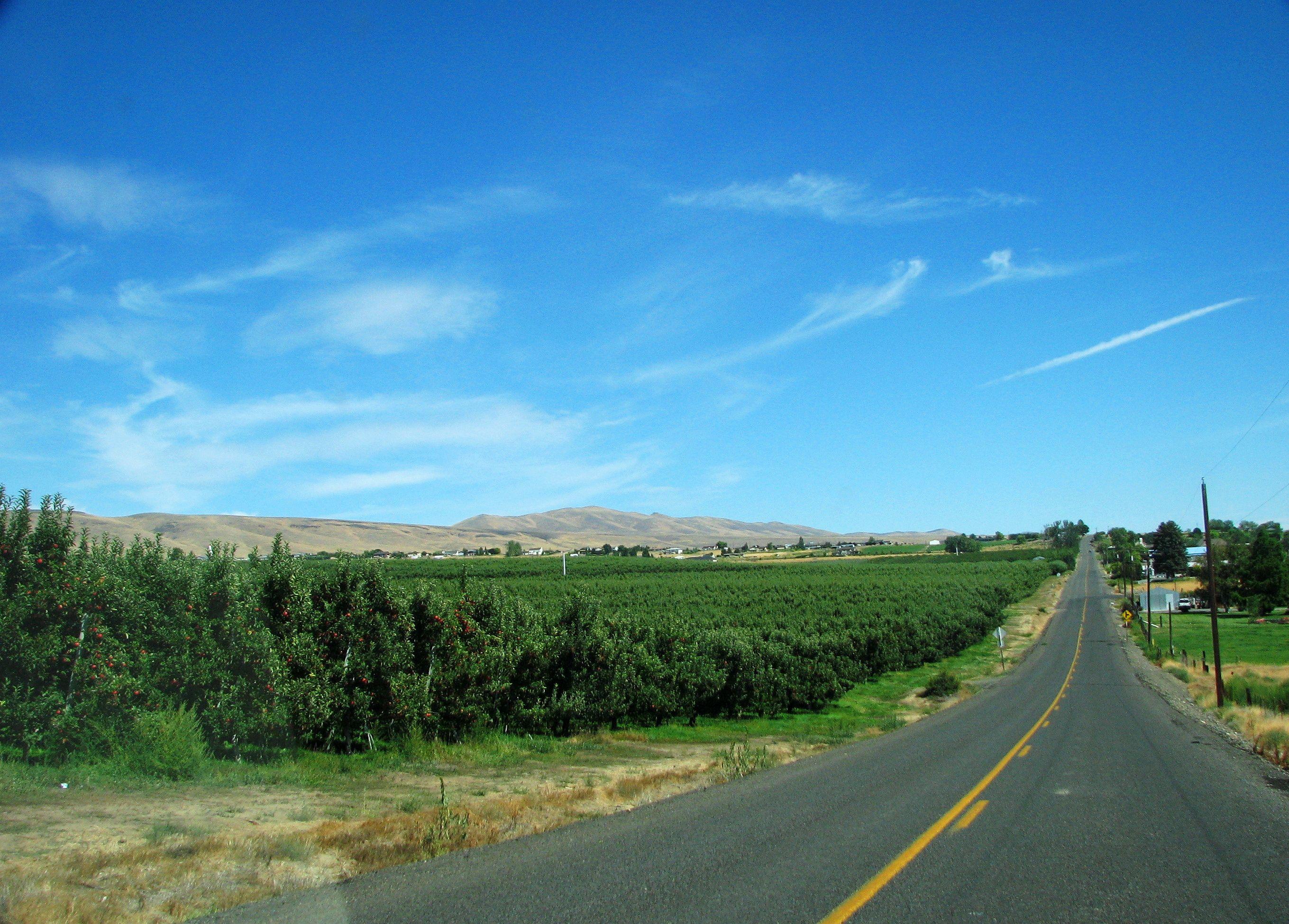 Apple orchard in Yakima Valley of Washington. ~~ 8/26/2009