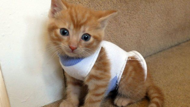 Kittens dressed in babies' socks to help protect them at