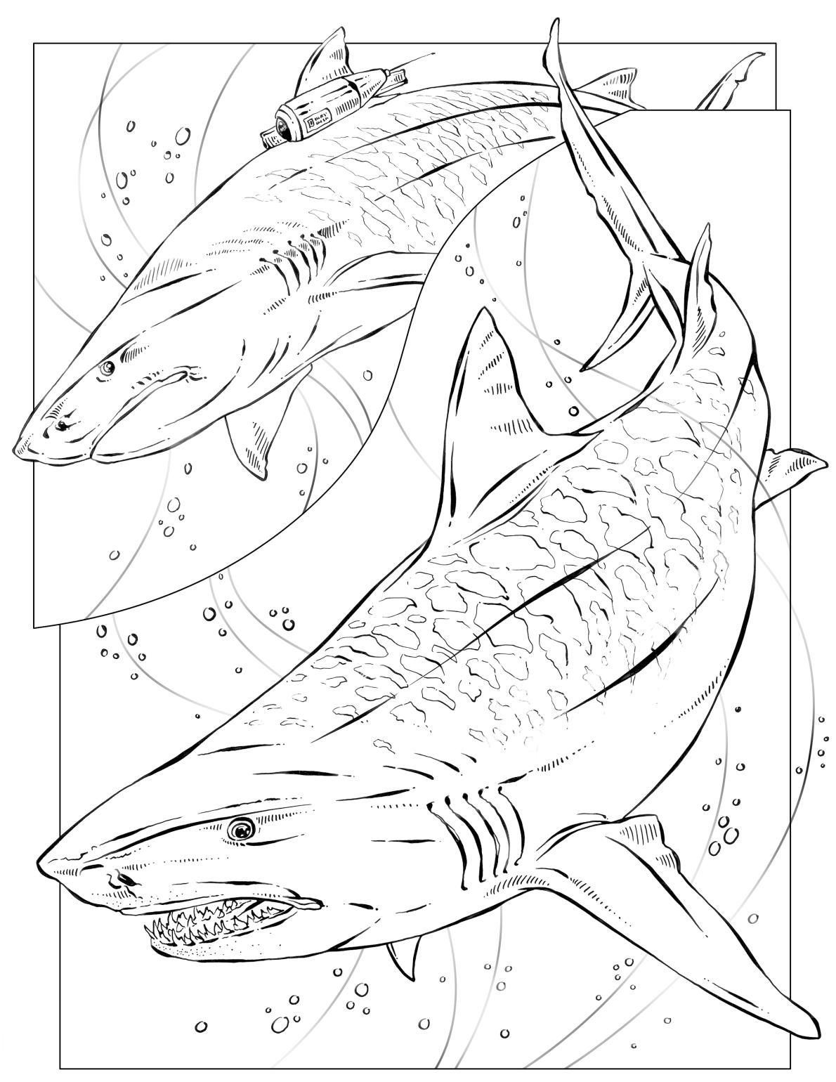 Coloring Book Animals J To Z Shark Coloring Pages Shark Drawing Coloring Pages