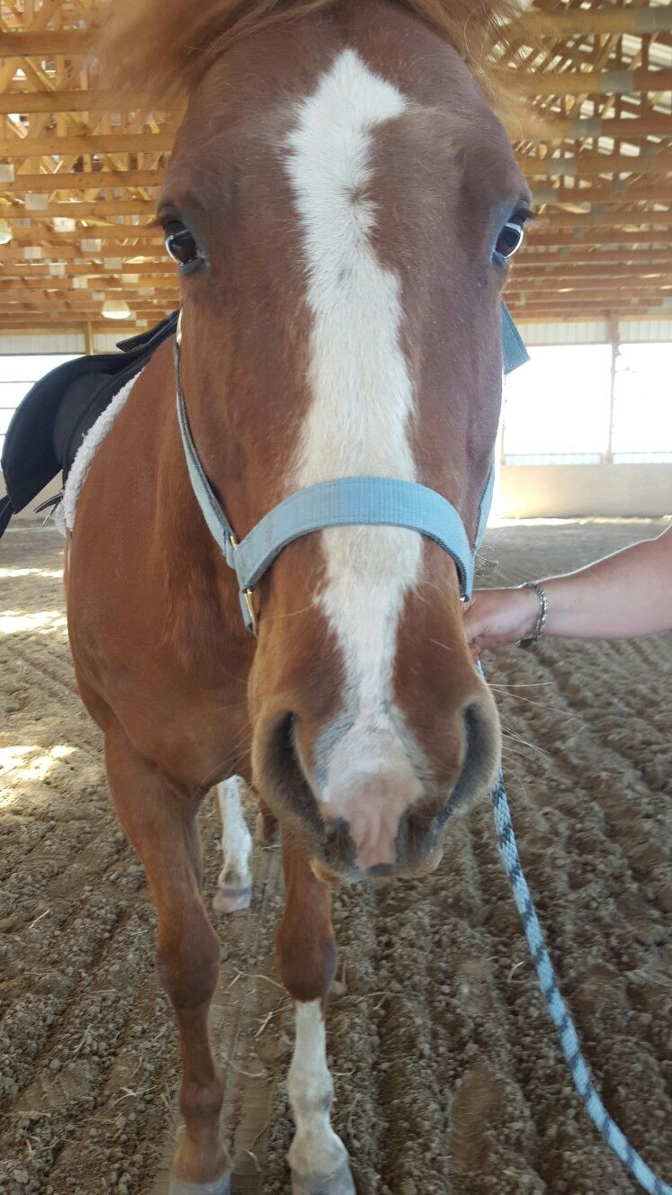 Rookie at J'Adore Equestrian Centre