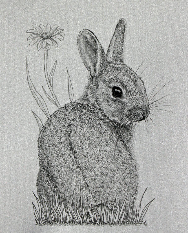 Картинки простым карандашом кролики
