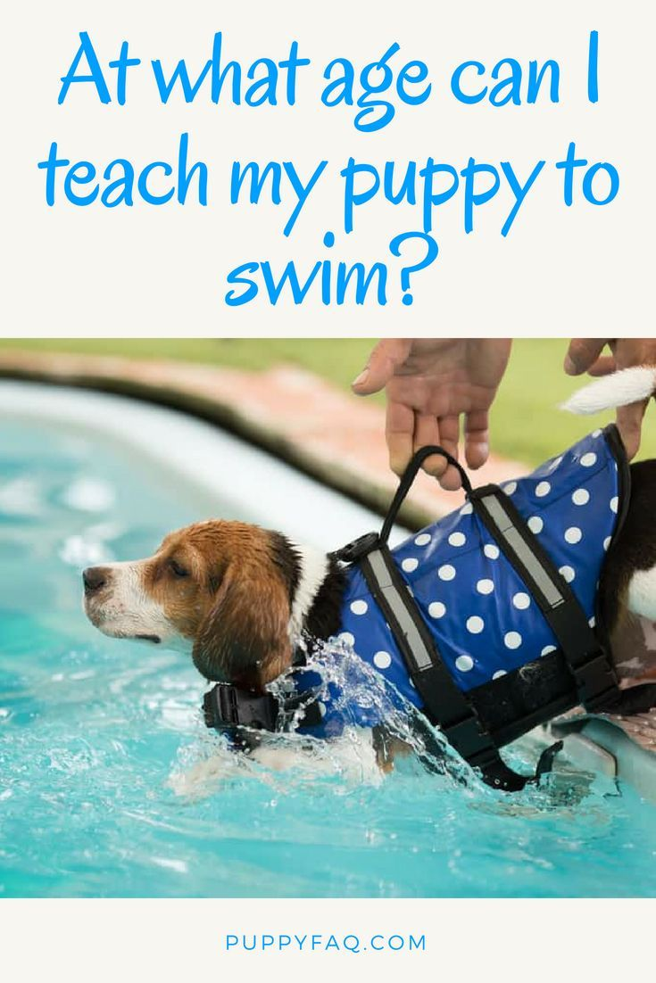 At What Age Can I Teach My Puppy to Swim? Dog training