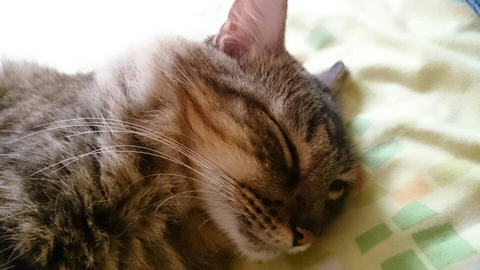 Tan lindo dormido