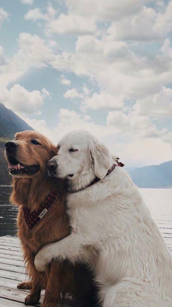 #dogsphotography