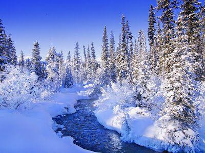 Mooie Sneeuw Achtergronden Hd Wallpapers Winter Bomen