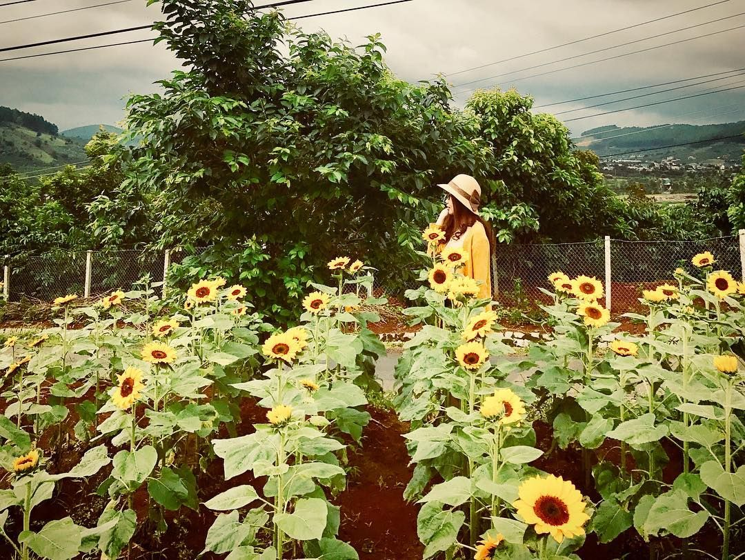 Im the biggest sunflower on this field.... . . . . . . #me ...