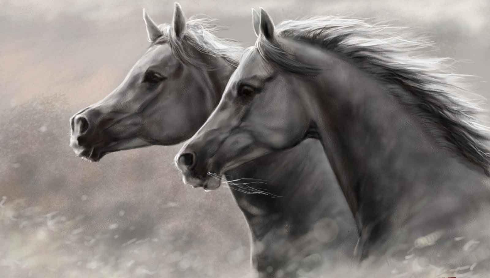 Fondos De Pantalla Carreras Proibidas: Fondos-pantalla-fotos-hd-imagenes-caballos-silvestres-wild