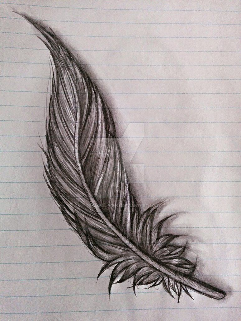 feather sketch by Primeval-Wings on DeviantArt