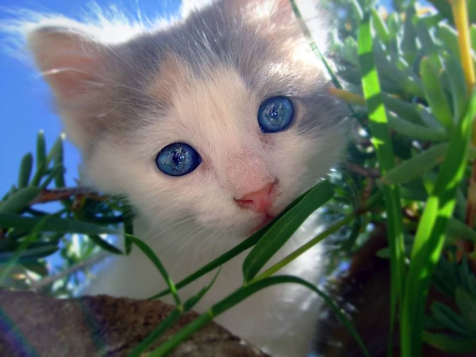 Olhos azuis.