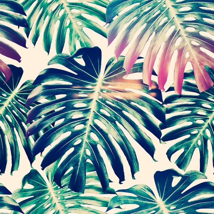 Beautiful Seamless Floral Pattern Backgrounds With Tropical Jungle Amazing Pattern Backgrounds