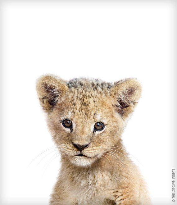 Lion print, Safari animal prints, Baby animal art, The Crown Prints, Nursery decor, Nursery animals, Baby room art, Nursery prints #babyanimals