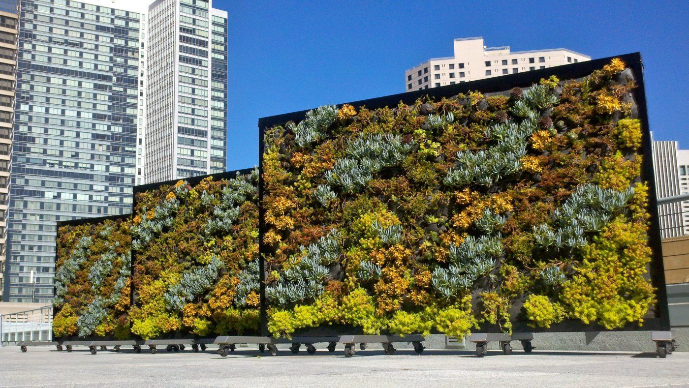 It\'s Not Easy Being Green: The Challenges of Living Walls With ...