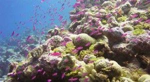 Si la humanidad sigue si tomar medidas nos enfrentaremos a una extinción masiva de los océanos terrestres similar a algunas que ya se dieron en el pasado. El estudio de un grupo internacional de científicos marinos apunta a que los océanos terrestres se enfrentan a un alto riesgo de extinciones masivas, una situación nunca vista en la historia humana. + info: http://www.ecoapuntes.com.ar/2012/09/los-oceanos-al-borde-de-una-extincion-masiva/