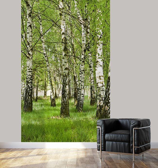 Paysage de nature avec cette photo de la forêt de bouleaux lé unique de papier peint haute qualité imprimé en france par scenolia