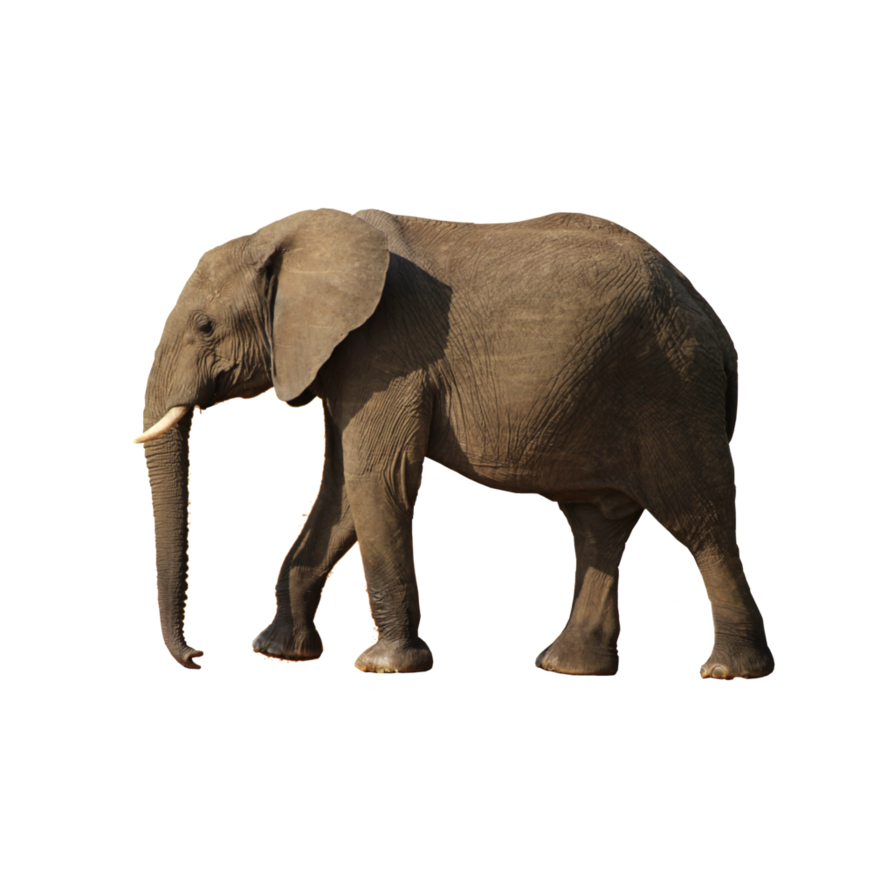 Gray Elephant Standing Png Image Elephant Grey Elephant Animals It is a very clean transparent background image and its resolution is 600x600 , please mark the image source when quoting it. png image elephant grey elephant